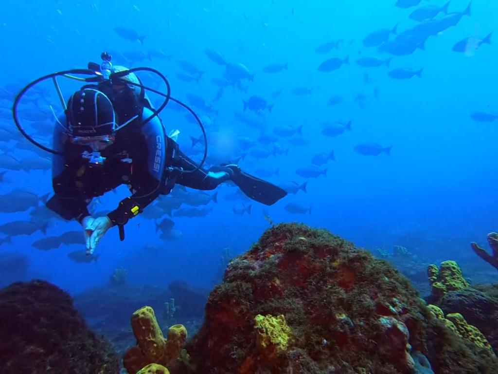 imagem-destacada-batente-das-agulhas-um-mergulho-surpreende-no-rio-grande-do-norte