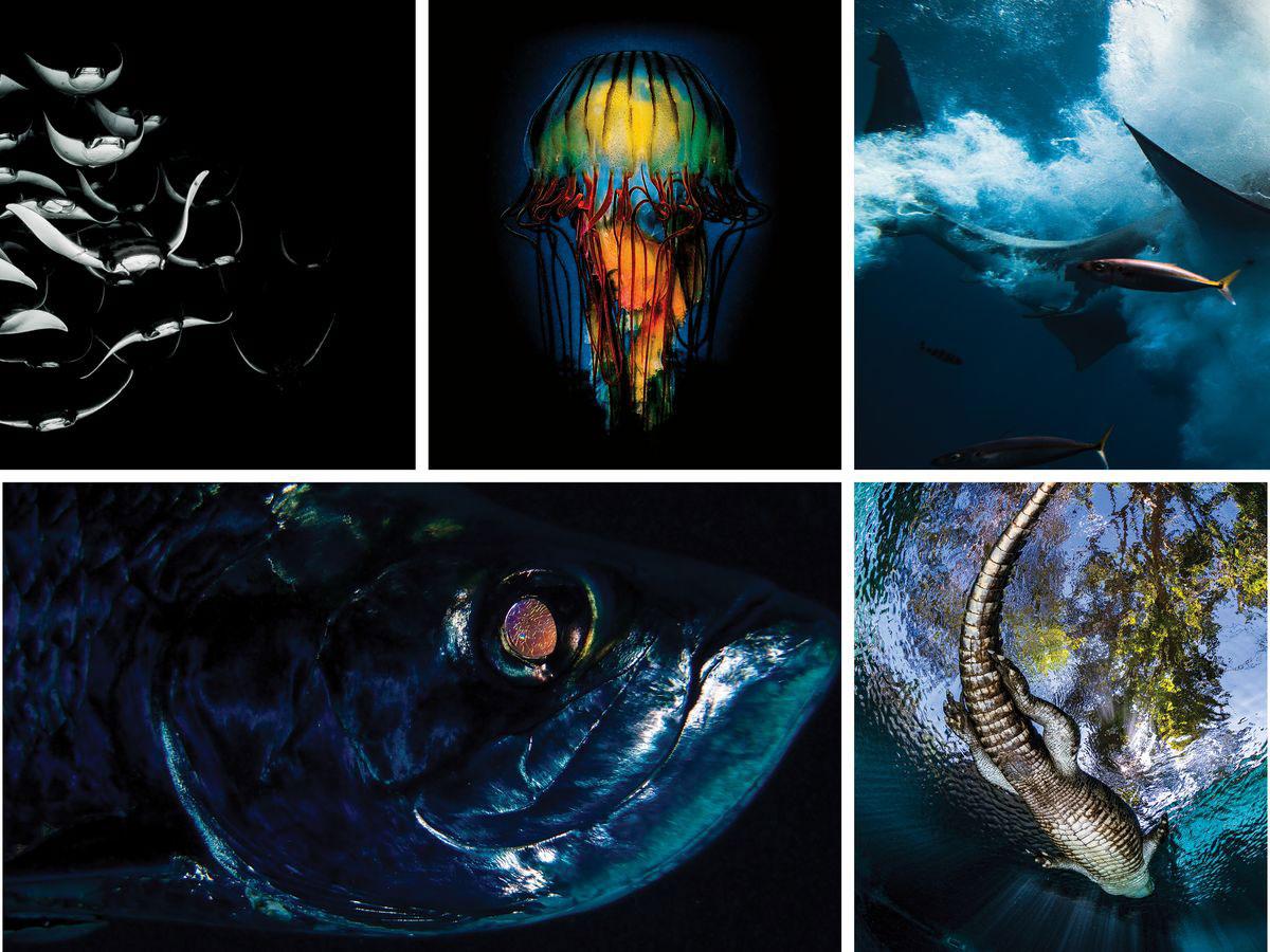 imagem-destacada-as-imagens-impressionantes-de-um-concurso-de-fotografia-subaquatica