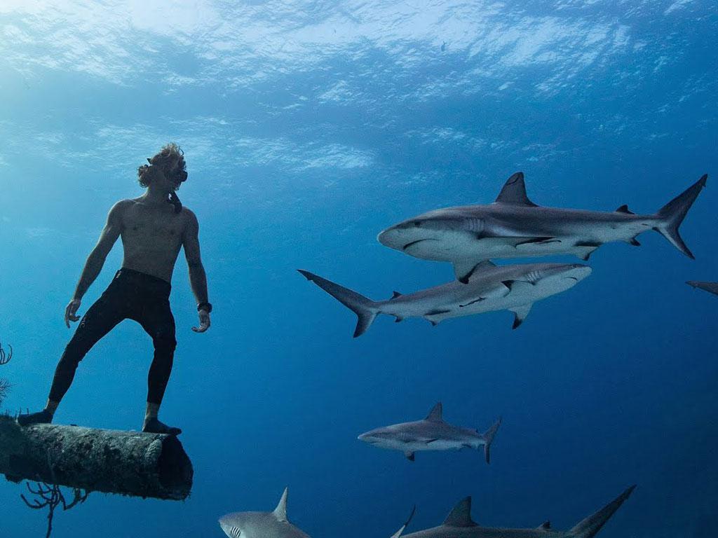 imagem-destacada-mergulho-livre-com-tubaroes-nas-bahamas