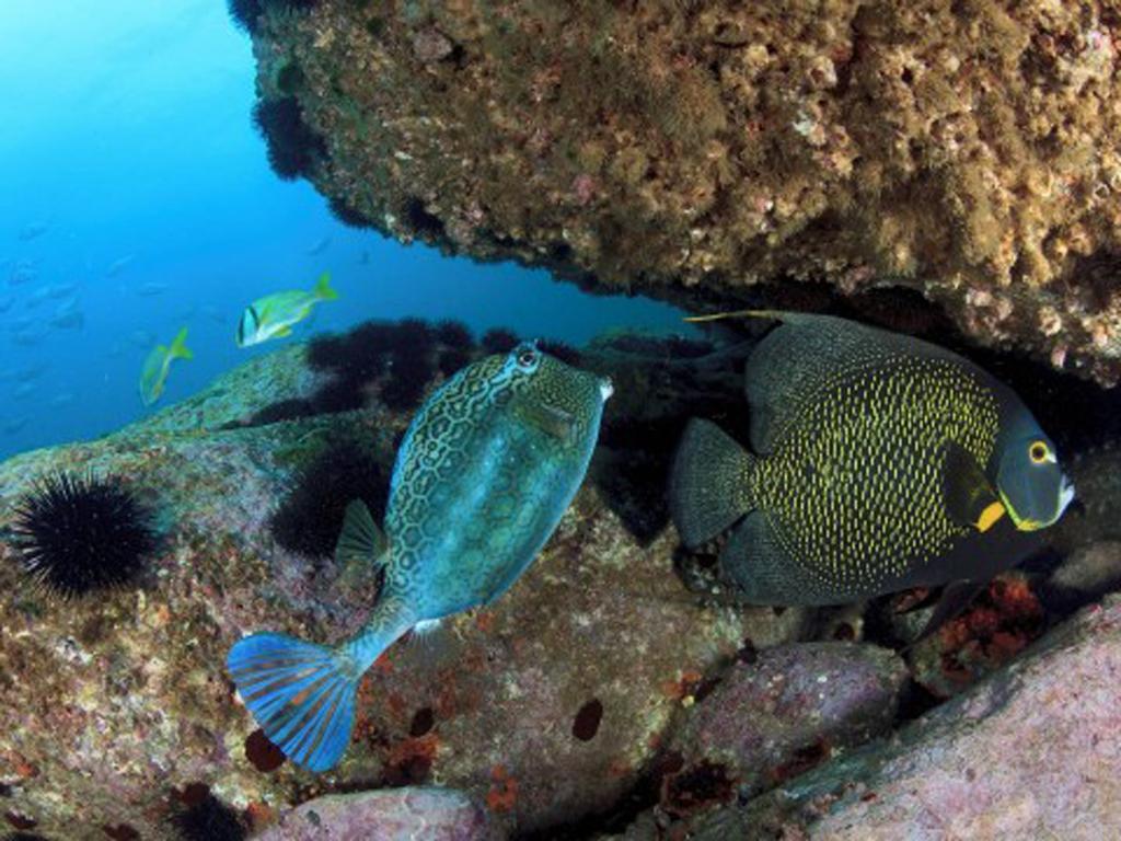 imagem-destacada-rio-de-janeiro-tera-guia-de-mergulho-com-mapeamento-de-belezas-naturais