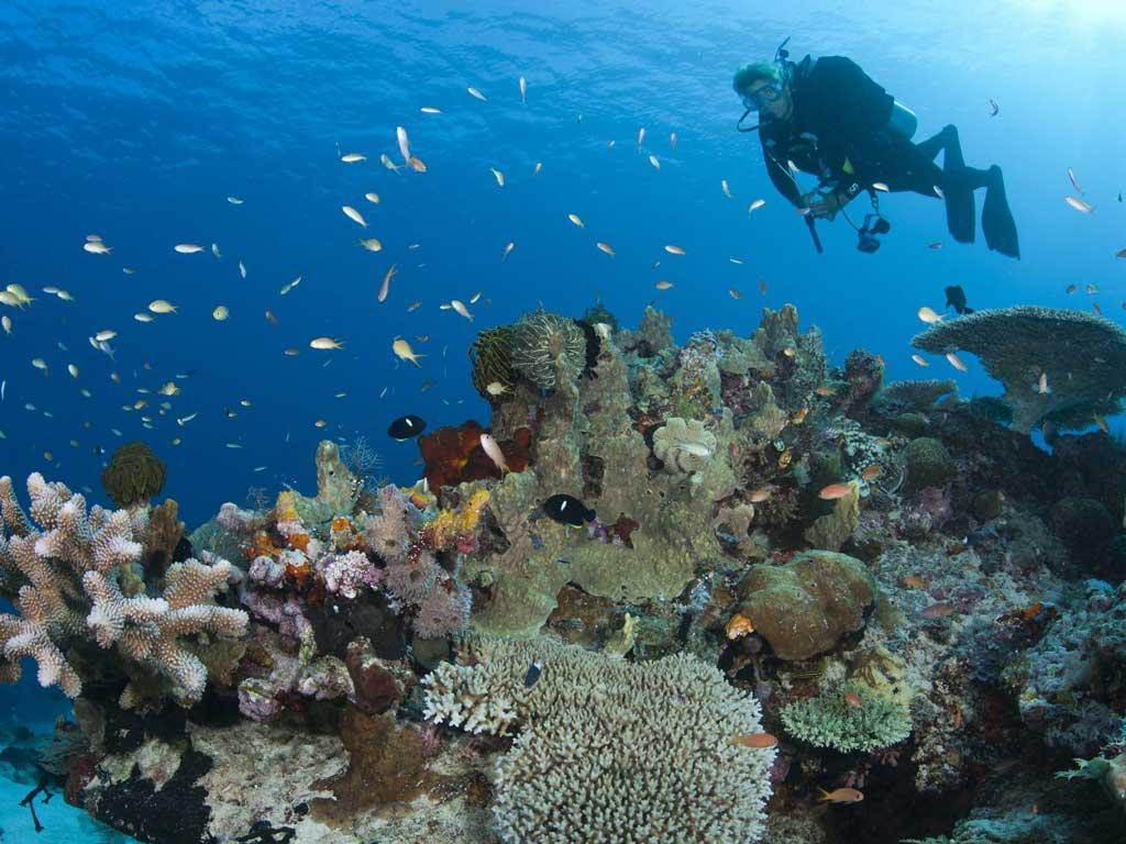 imagem-destacada-pesquisar-propoe-uma-nova-abordagem-para-mergulhos-em-area-recifais