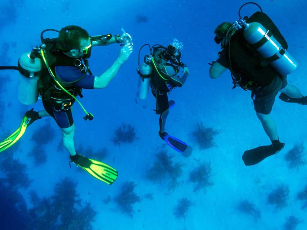 imagem-destacada-mostramos-cinco-apps-essenciais-para-mergulhadores