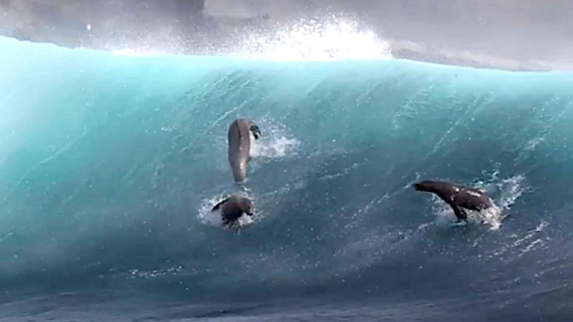 imagem-destacada-o-belissimo-surfe-de-leoes-marinhos-na-california