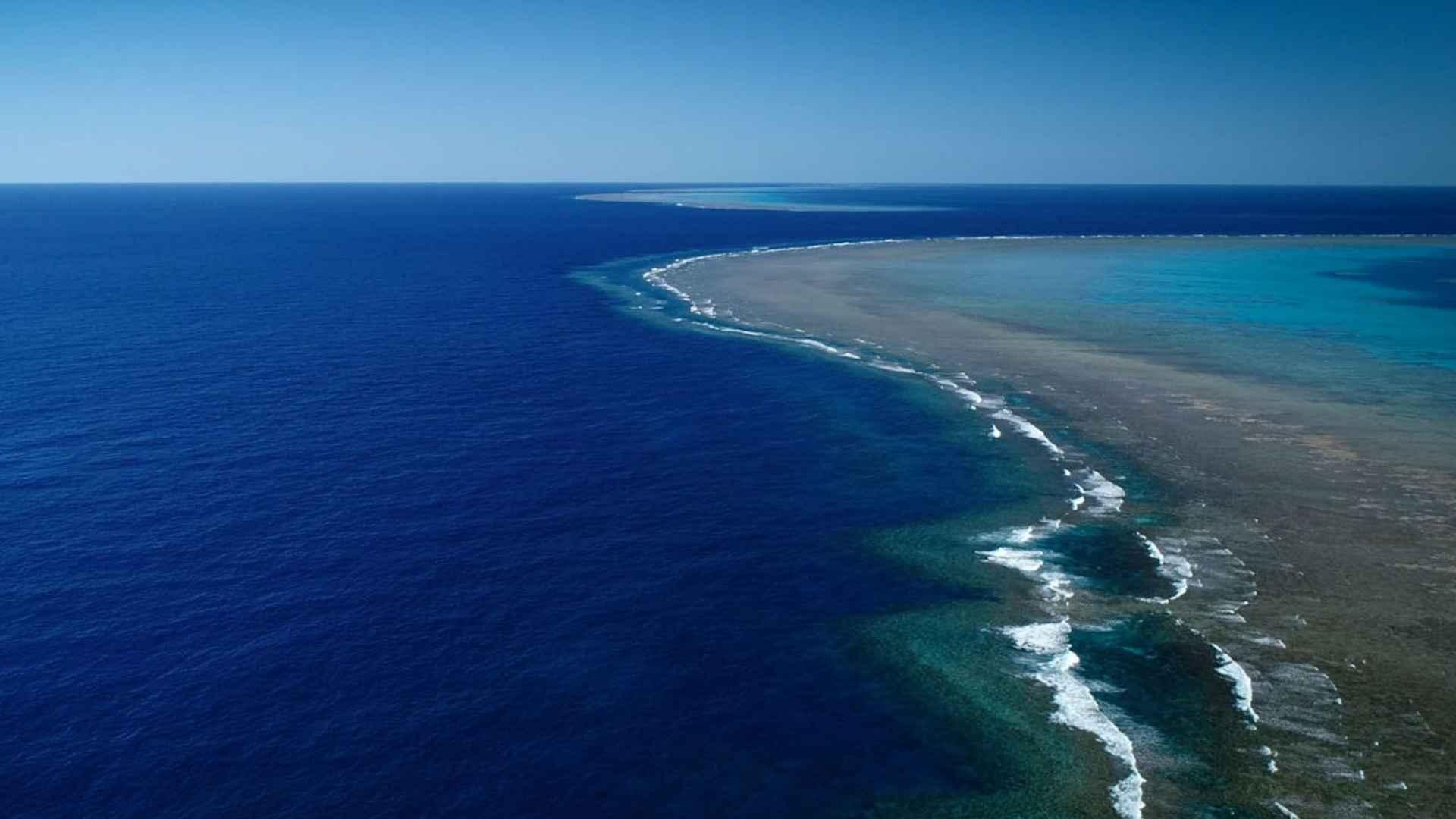 imagem-destacada-coral-de-500-metros-e-descoberto-na-australia
