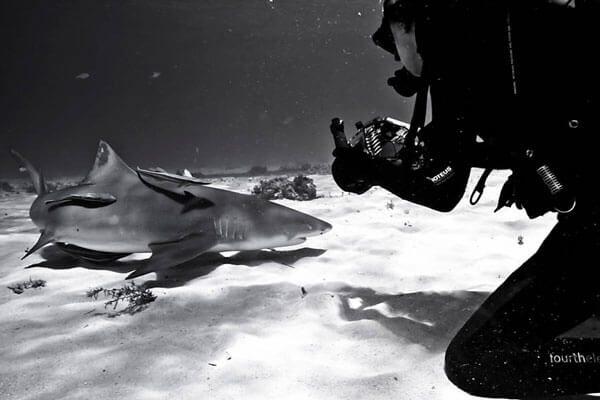 Curso Identificação e comportamento de tubarões (Identification and behavior of sharks)